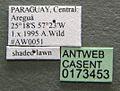 Camponotus silvicola casent0173453 label 1.jpg