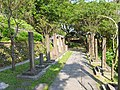 Caoling Historic Trail 草嶺古道 - panoramio.jpg