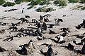 Cape Town 2012 05 16 0058 (7179925357).jpg