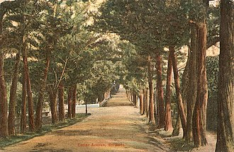 Juniperus bermudiana - A postcard of Cedar Avenue in Hamilton, Bermuda before the species declined.