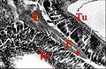 Celaenia , tissu endocrinoïde 1.jpg