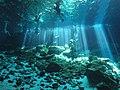Cenotes in Yucatan in Mexico (28712345287).jpg