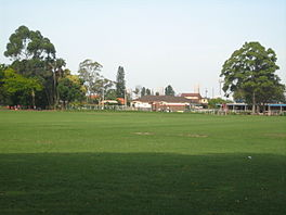 Looking East Towards Ashfield From Centenary Park With The Sydney Skyline In Background