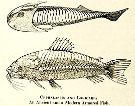 Cephalaspis-0comparison.jpg