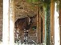 Chester Zoo (12227010596).jpg