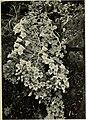 Climbing plants (1915) (20034369664).jpg