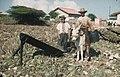 Collectie Nationaal Museum van Wereldculturen TM-20029114 Aloe-snijders Aruba Boy Lawson (Fotograaf).jpg