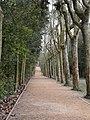 Collserola - Passeig dels Plàtans P1170621.jpg