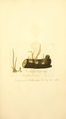 Coloured Figures of English Fungi or Mushrooms - t. 199.png