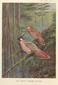 Common Koklass Pheasant by George Edward Lodge.png