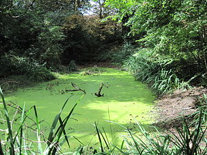 Coppett's Wood and Scrublands - Image: Coppett's Wood pond