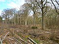 Coppicing, Brickyard Copse - geograph.org.uk - 149413.jpg