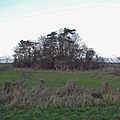 Copse near Wootton Grange - geograph.org.uk - 1619614.jpg