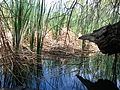 Corn Creek.jpg