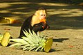 Costa Rica 44.DSCN4144-new (30761833750).jpg
