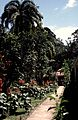 Costa Rica Tortugero Jardin Hotel Ilan Ilan Jardin - panoramio.jpg