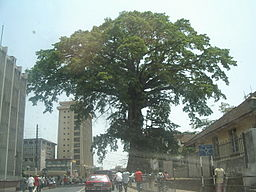 Cotton Tree i Freetown