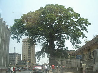 Freetown - A street-level view of Freetown and the Cotton Tree under which former African slaves prayed and christened Freetown in 1792