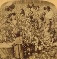 Cotton is king - A plantation scene, Georgia (NYPL b11707428-G90F151 024F) (cropped).tiff