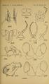 Craspedosomatidae of North America 1895 Plate XII.png