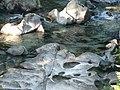 Creek (0d2e875688e84fc39746c9700607d867).JPG