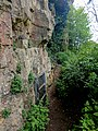 Creswell Gorge, Creswell Craggs, Notts (105).jpg