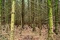 Crocknafeola Wood near Attical - geograph.org.uk - 941504.jpg