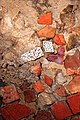 Cromatismi murari-5 (526157421).jpg