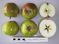 Cross section of Small's Admirable, National Fruit Collection (acc. 1949-287).jpg