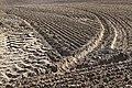 Cutivated land in Brodovin.jpg