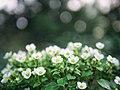 Dżu Dżu Garden - Flickr - Łukasz Rawa (7).jpg