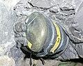 DGS-2-MINEBACK, NEVADA TEST SITE - DPLA - 07a91fd83fdea59dbe6a9e919f8cf072.jpg