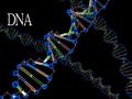 DNA y.xcf