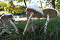 DO Mushrooms (5220972020).jpg