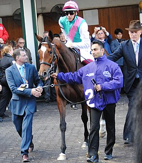 Enable (horse) British-bred Thoroughbred racehorse
