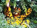 Danza del tigre.jpg