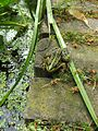 De Tuinen van Hoegaarden 01.jpg