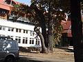 Debrecen2013október11 053.jpg