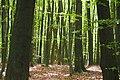 Deciduous forest- transience meet rebirth.jpg