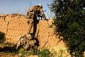 Defense.gov photo essay 100612-M-9966L-013.jpg