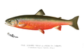 Denton Male Sunapee Trout.png