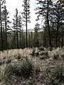 Derrick Trail, Payson, Arizona - panoramio (14).jpg