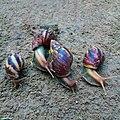 Des Escargots.jpg