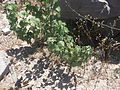 Desert plants 34.JPG