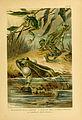 Deutschlands Amphibien und Reptilien (5981666259).jpg