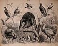 Die Praxis der Naturgeschichte - ein vollständiges Lehrbuch über das Sammeln lebender und todter Naturkörper; deren Beobachtung, Erhaltung und Pflege im freien und gefangenen Zustand; Konservation, (20915449396).jpg