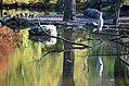Dierenpark Emmen Reflection of a bird (10930279905).jpg