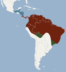 Distribution of Trachops cirrhosus.png