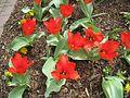 Dixon Gardens Memphis TN 2014-04-06 040.jpg