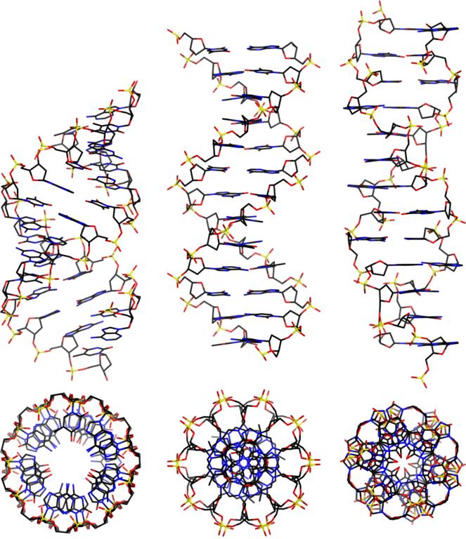 A-, B- och Z-DNA.
